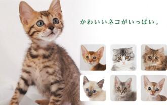 ネコセカイはかわいいネコがいっぱい