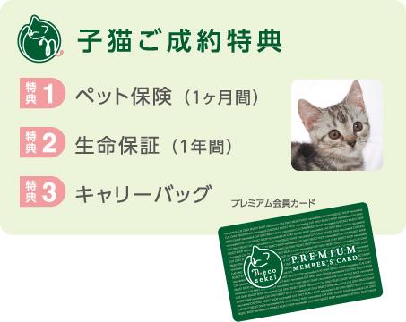 ネコセカイ子猫ご成約特典