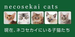 ネコセカイにいる子猫たち