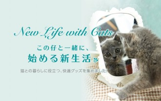 new life with cats