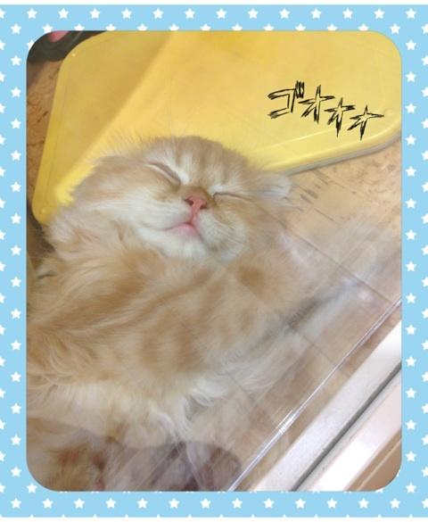 ブログ/☆キュートなスコティッシュちゃん☆
