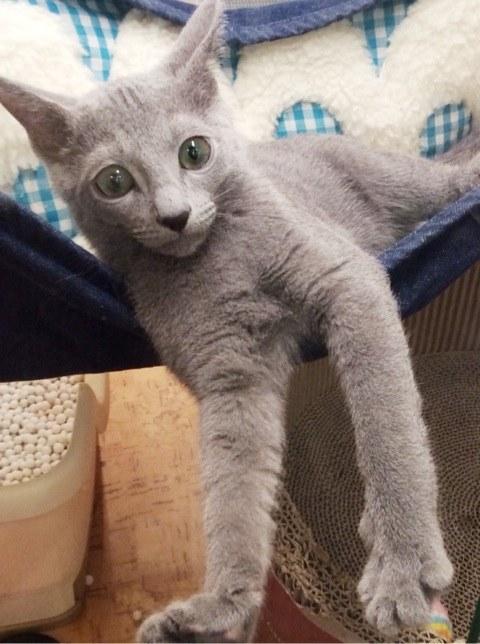 イケメン猫さん