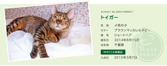ネコセカイ子猫・トイガー