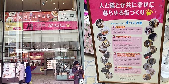 猫の世界2015
