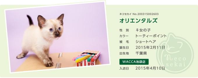 ネコセカイ子猫・オリエンタルズ