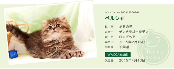 ネコセカイ子猫・ペルシャ