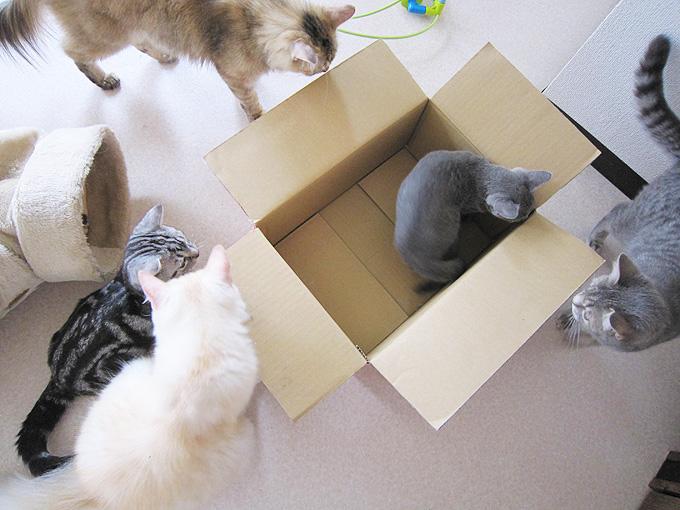 ネコセカイ箱猫