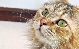 ネコセカイ可愛く咲いた猫さんのお鼻