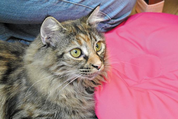 ネコセカイ 猫さんの素敵なお耳